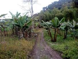 Finca mira valle 16 plazas tendidas jurisdicción de Tuluá valle producción en café y banano casa 5 habitaciones