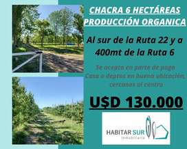 Chacra 6 Hectáreas con producción Organica de Peras y Manzanas