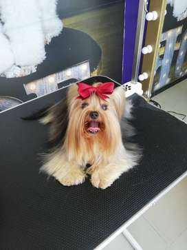 Groomer Peluquero Canino