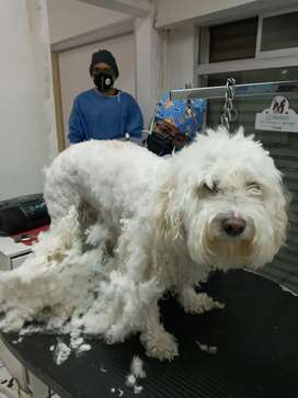 Peluqueria canina en calderón
