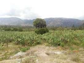Terreno cultivable de 19 111m² Maynay Huanta, OCASIÓN!