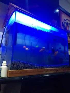 Pescera con accesorios en promocion
