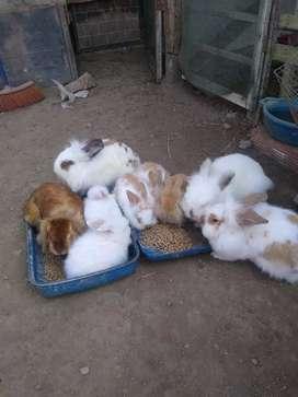 Lindos conejos