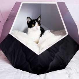 Casas Decorativas para Mascotas