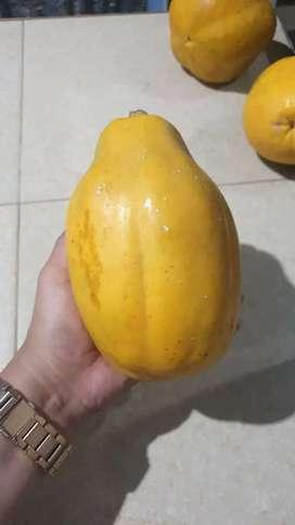 Guanabana y papaya tipo a y b 100% carmense