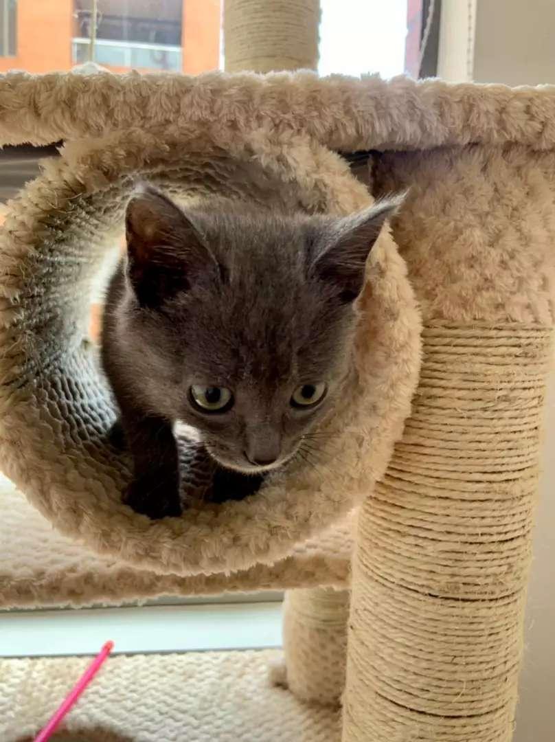 Lindos gaticos 2 meses