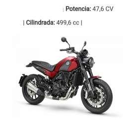 Leonciono 502