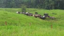 Vendo chacra para la ganadería y otros productos para la siembra  ubicado en Huánuco, puerto sungaro cerca ala carretera
