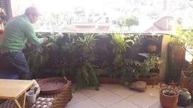 Trabajador de jardinero y pintura