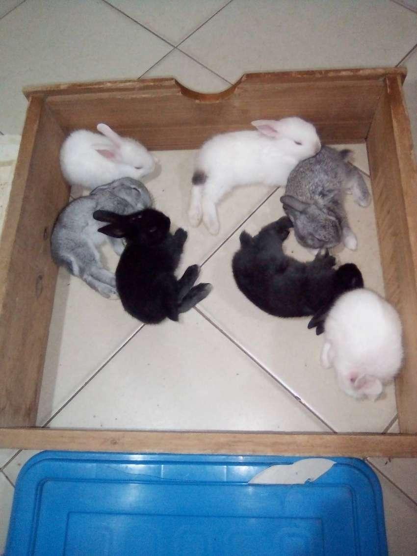 Conejitos para Mascotas en venta en Valledupar