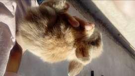 Hermoso conejito de mascota