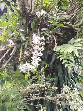 Finca pequeña en Sasaima cundinamarca