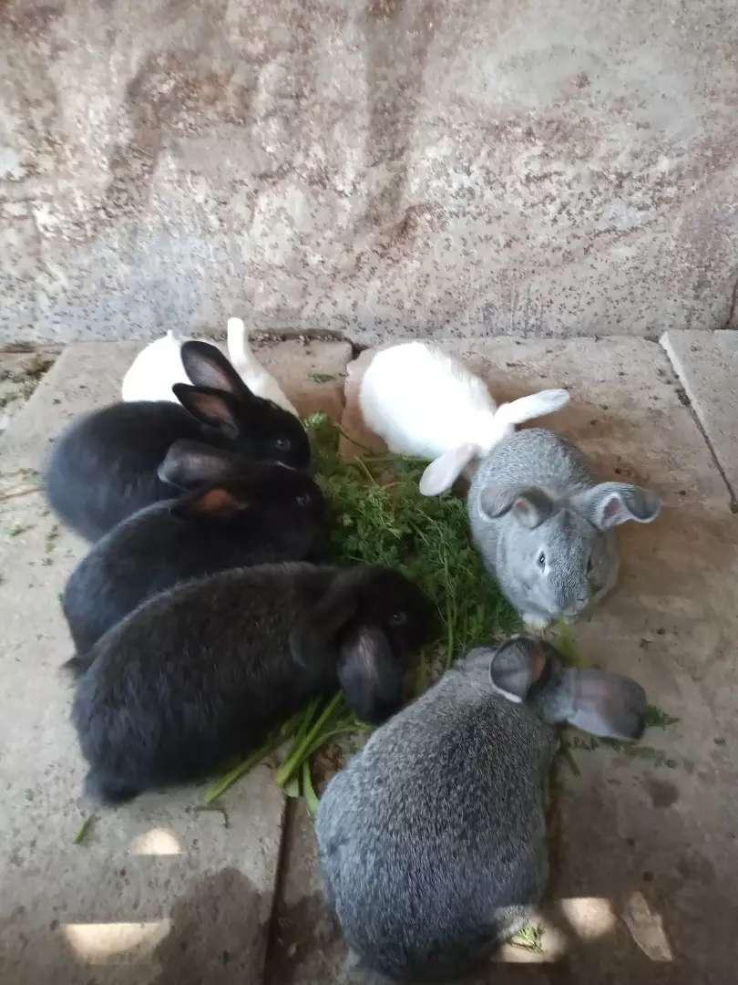 Vendo conejos 0