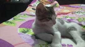 Adopcion  gats