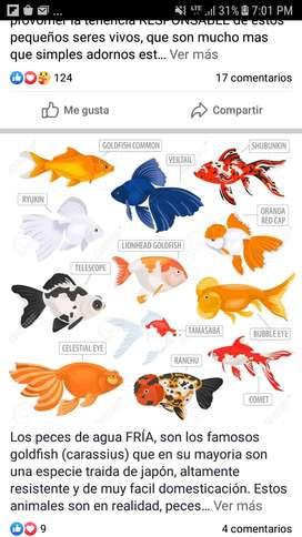 VENTA de peces