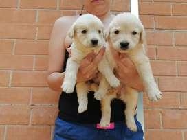 Cachorros en venta