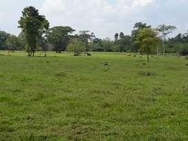 Finca en venta excelente zona ganadera y agrícola