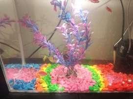 Se vende acuario de 40 litros con filtro y decoración.