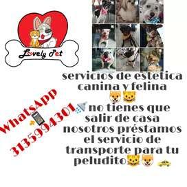 Lovely pet Servicios de estetica canina y felina