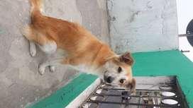 Regalar un perrito de 8 meses