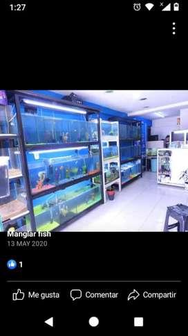 Exhibidor para peces