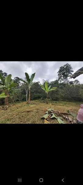 Se vende hermosa finca bien cultivada 3 hectareas y media, picinas de tilapias chanchera, cacao, naranjas y río