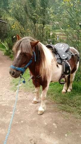 Vendo pony fallabela