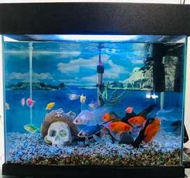 Se vende acuario con peces por motivo de viaje.