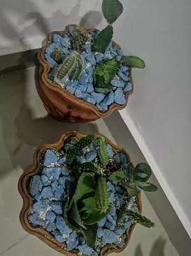Venta de captus y plantas..