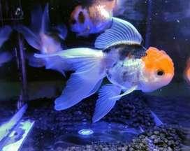 Ventas de peces y accesorios acuarios