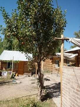 Complejo cabañas de tronco macizo paso Agua Negra, 10km de Rodeo