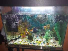 Pecera y pescados