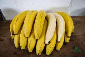 Distribución y comercialización de Frutas