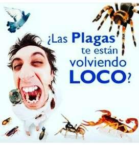 Fumigacion control de plaga y roedores