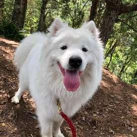Busco novia para mi hermoso perro