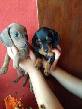 Salchichas Mini Isabelina Y Negros
