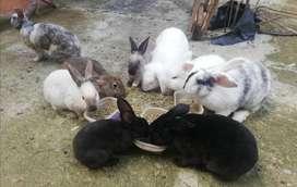 Vendo conejos economicos