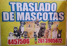 TRASLADO DE MASCOTAS ¡!!