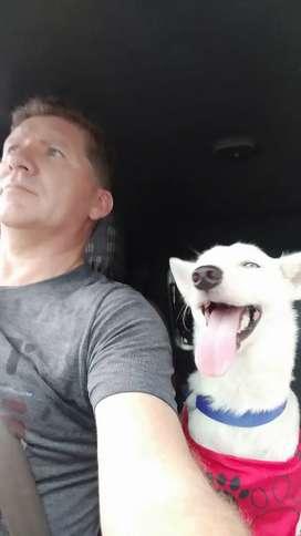 Transporte de mascotas dentro y fuera de la ciudad en Santa Marta
