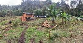 Vende 42 o 92 hectareas en el sector de las golondrias via a la 10 de Agosto parroquia Malimpia ingreso x el Río Jordan