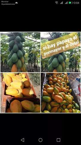 papaya al por mayor y al detal.  BOGOTA /Pereira /Cali/ Medellin
