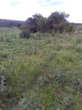 Terreno de 1500 m2 y algunas hectareas