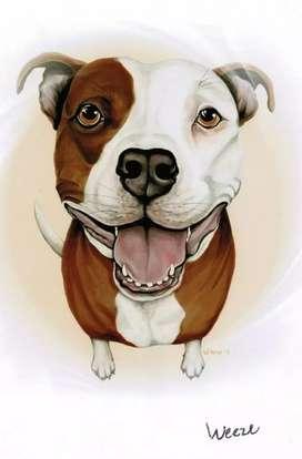 Busco perro para monta grueso de raza pitbull-bully