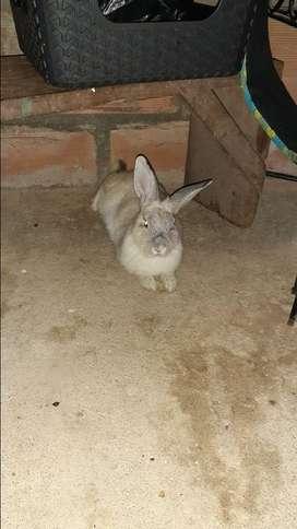 Conejos un par