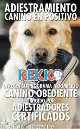 adiestramiento canino adiestradores certificados