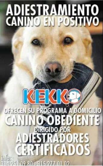 adiestramiento canino adiestradores certificados 0