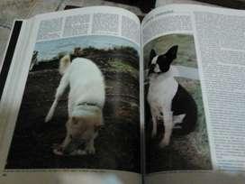 Los perros del mundo