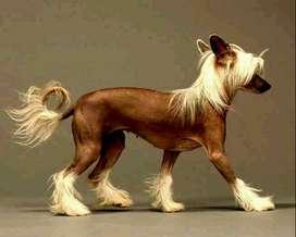 peluqueria para mascotas