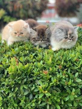 Bellos persas