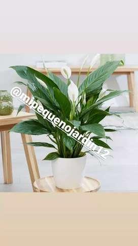 Plantas para decorar tu jardin